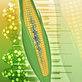 Should you avoid genetically modified foods after Lap-Band in Dallas?